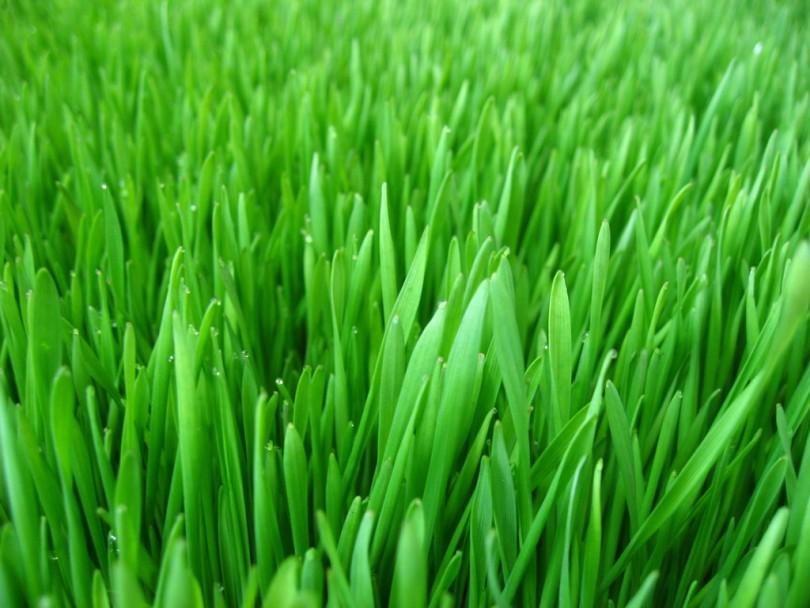 رنگ سبز گیاهان؛ دلیل وجودداشتن خدا